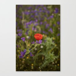 Red poppy's tale Canvas Print