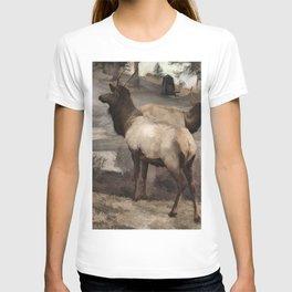 Young Elk Bucks   -  Banff Alberta T-shirt