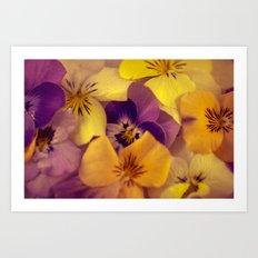Viola bed. Art Print