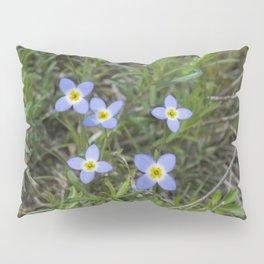 Thyme Leaved Bluets Pillow Sham