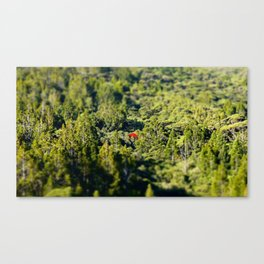 Lonely Pohutukawa Tree in Karekare Forest, New Zealand Canvas Print