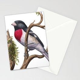 Rose-breasted Grosbeak (Pheucticus ludovicianus) Stationery Cards