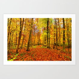 Autumn Forest with Fallen Leaves Art Print