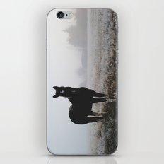 Frosty Klamath Horse iPhone & iPod Skin