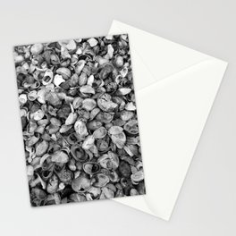 Seashells from Long Island Sound - Black & White Stationery Cards