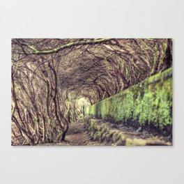 The living forest Canvas Print