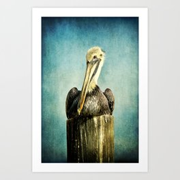 Brown Pelican Art Art Print