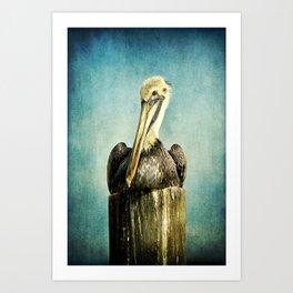 Brown Pelican Art Art Print