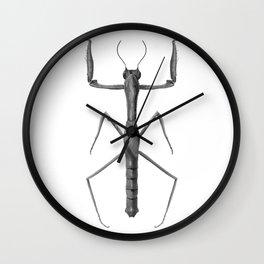 Danuria  affinis Wall Clock