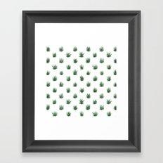Haworthia Succulents Framed Art Print
