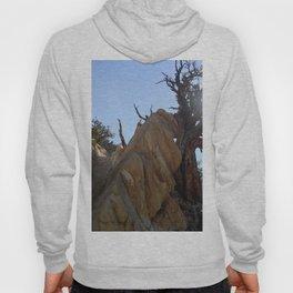 Tree leaning on rock Hoody