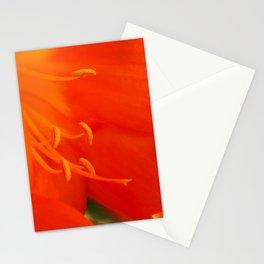 Orange Lily Stationery Cards
