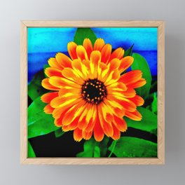 Orange Marigold Framed Mini Art Print