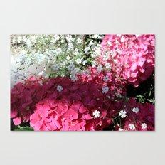 Bright Fuchsia Pink Hydrangea  Canvas Print