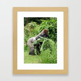 ANIMAL KINGDOM: Silverback Gorilla Snacks Framed Art Print