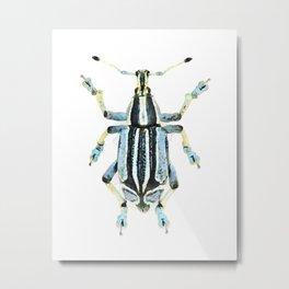 Eupholus benetti Beetle, Papua New Guinea Metal Print