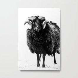 Black Ram Metal Print