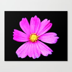 Cosmos Flower Photography Close up Macro Canvas Print