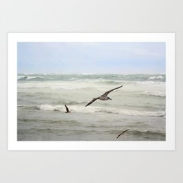 Seagulls flying over rough sea Art Print