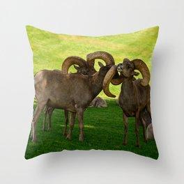 Entangled Horns - Desert Bighorn Rams Throw Pillow