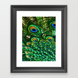 Pretty Peacock Framed Art Print