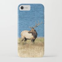 elk iPhone & iPod Cases featuring Elk by Becca Buecher
