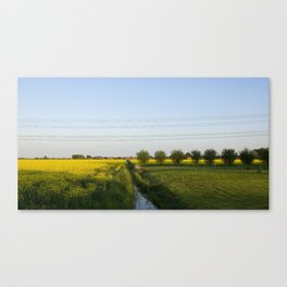 Colors in the field Canvas Print