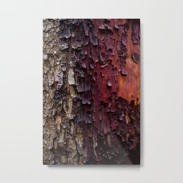 Madrone Metal Print