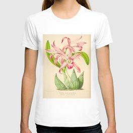 LAELIA AUTUMNALIS Vintage Botanical Floral Flower Plant Scientific Illustration T-shirt