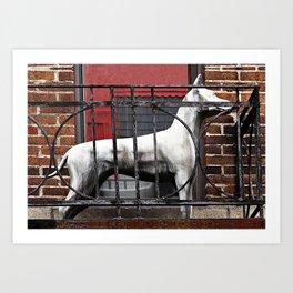 Balcony Dog Art Print