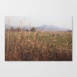 Fall in Wilcox Canvas Print