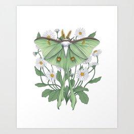 Metamorphosis - Luna Moth Art Print