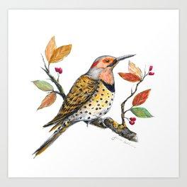 Northern Flicker Watercolor Art Print