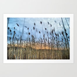 Wild Rye Grass Art Print