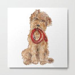 Wired Hair Terrier Ready for Walkies  Metal Print