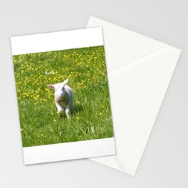 Rosie the Lamb Photography Stationery Cards