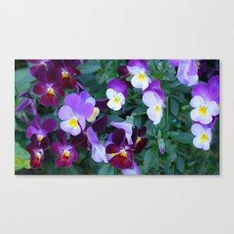 Beloved violas Canvas Print