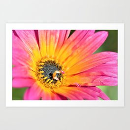 Beautiful Pink Imperfection Flower  by Reay of Light Photography Art Print