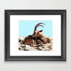 Nubian Ibex 3 Framed Art Print