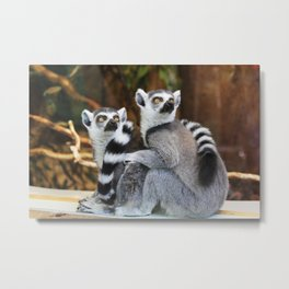 Ring-Tailed Lemurs Metal Print