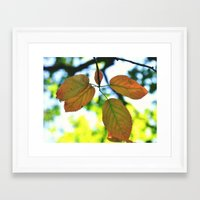 trout Framed Art Prints featuring Trout & Trails by Emma Deer
