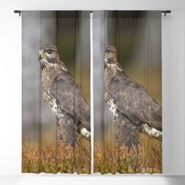 Common Buzzard Blackout Curtain