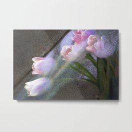 Tulips Emerging Metal Print