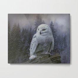 Snowy Owl looking for prey Metal Print