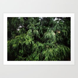 Pinefalls Art Print