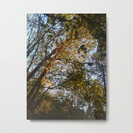 Filtered Sunlight Metal Print