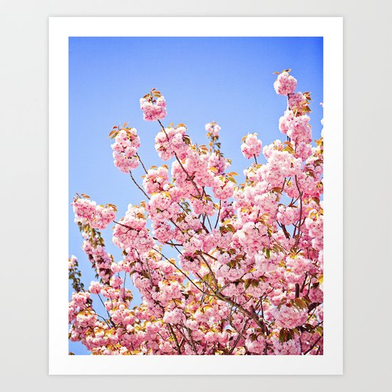 Pink Cherry Blossoms Against Blue Sky Art Print