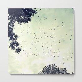 Flock of birds at sunset Metal Print