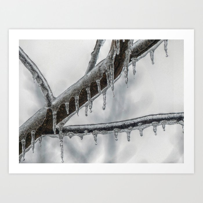 Icy Branch Art Print