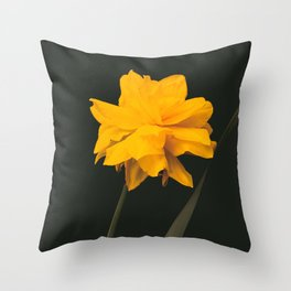 Elegant gold on black old-master botancial print style:  Double Daffodil photograph Throw Pillow